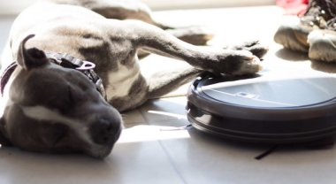 The ILIFE A6 A Budget Robot Vacuum For Pet Hair